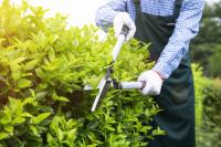 植物新品種權保護期限的起算日期是