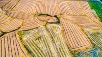 農村集體土地征收程序